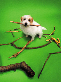 Dog surrounded by twigs and branches